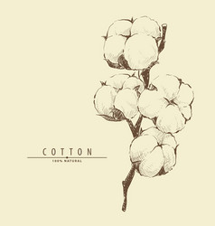 Cotton plant flower vector