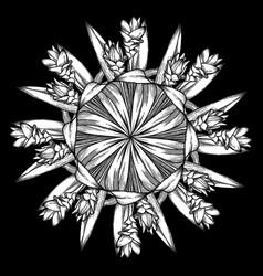 graphic curcuma set vector image