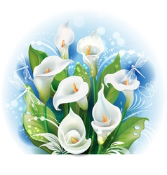 Bouquet of White Calla lilies vector