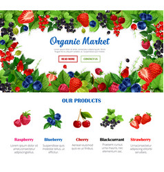 Fruit and berry poster for organic food design vector