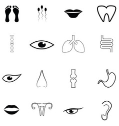 human anatomy icon set vector image
