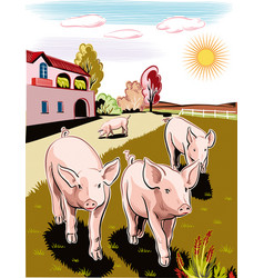 Pigs in a meadow vector