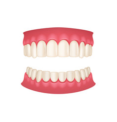 realistic 3d detailed human mouth with teeth vector image
