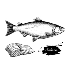 vintage salmon drawing Hand drawn vector image
