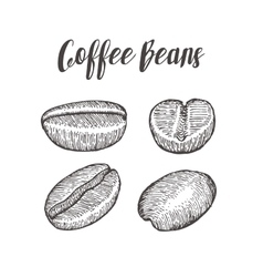Coffee bean seed natural organic caffeine fruit vector image