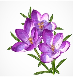 Crocus Spring Flowers for your design vector
