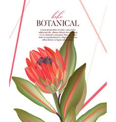 macro wild protea flower exotic tropical african vector image