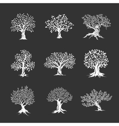 magnificent olive and oak trees silhouette vector image