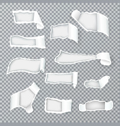 torn paper curls realistic transparent vector image