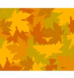 autumn concept background vector image vector image