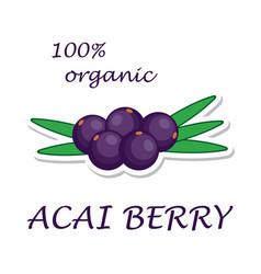 acai berries organic ingredient healthy eco food vector image