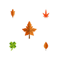 Flat icon foliage set of aspen alder foliage and vector