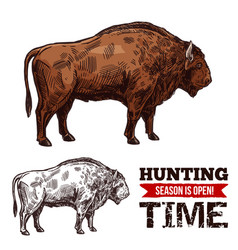 Hunting time sketch poster with buffalo vector