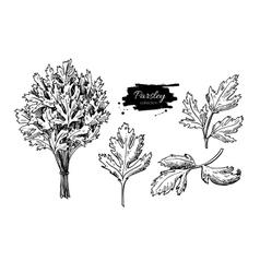 Parsley hand drawn set vector
