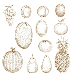 Sketches of fresh harvested fruits vector