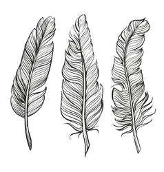 feathers set hand drawn llustration vector image vector image