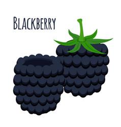 fresh berries sweet blackberry flat vegetarian vector image