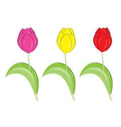 Set tulips vector