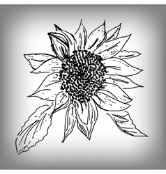 sunflower by hand Monochrome vector image