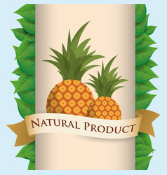 pineapple natural product poster ribbon vector image