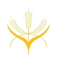 Ears of Wheat Barley or Rye vector image vector image