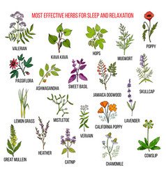 best herbal remedies for sleep and relaxation vector image