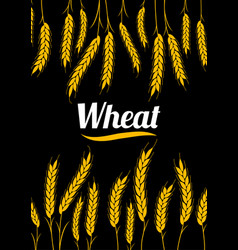 design cover gold wheat ears organic wheat bread vector image