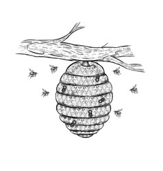 sketch beehive vector image