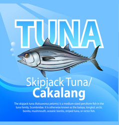 skipjack tuna vector image