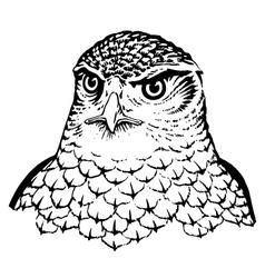 Falcon vector image