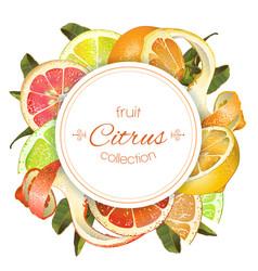 Citrus round banner vector