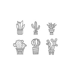 Collection of cactuses and succulents houseplants vector