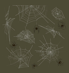 collection of spiders and webs vector image