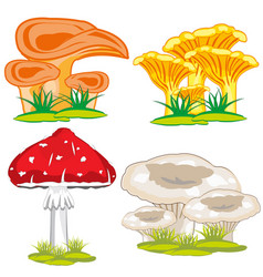 Edible and poisonous mushroom vector