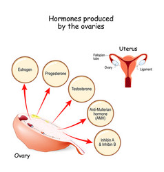 Hormones produced ovaries human endocrine vector