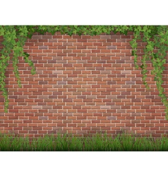 Ivy and grass on brick wall background vector