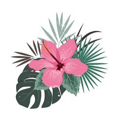 bouquet composition with pink hibiscus flower and vector image