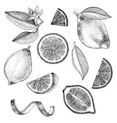 hand drawn lemons collection vector image