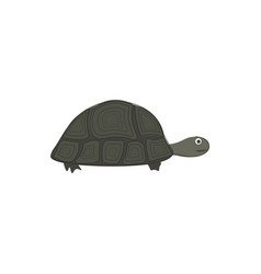 turtle hand drawn design on white background vector image