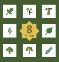 flat icon natural set of wood linden baobab and vector image