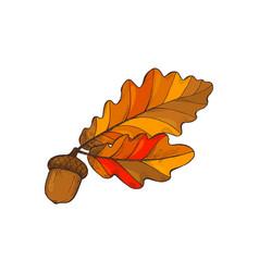 Leaf foliage and acorn autumnal frondage vector