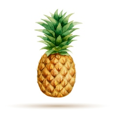 Pineapple hand drawn watercolor vector