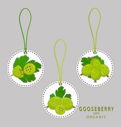 The gooseberry vector