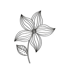 flower ornament decoration sketch vector image