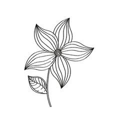 flower ornament decoration sketch vector image vector image