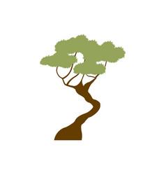 green tree bonsai decoration garden image vector image