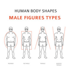 Human body shapes male figures types set vector