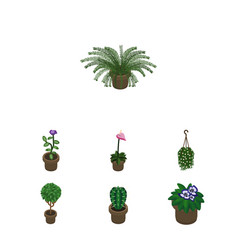 Isometric flower set of tree flowerpot plant and vector