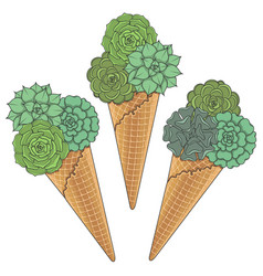 Set of of ice cream from succulents vector