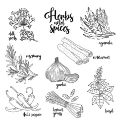 Spices and herbs set Contour on white vector